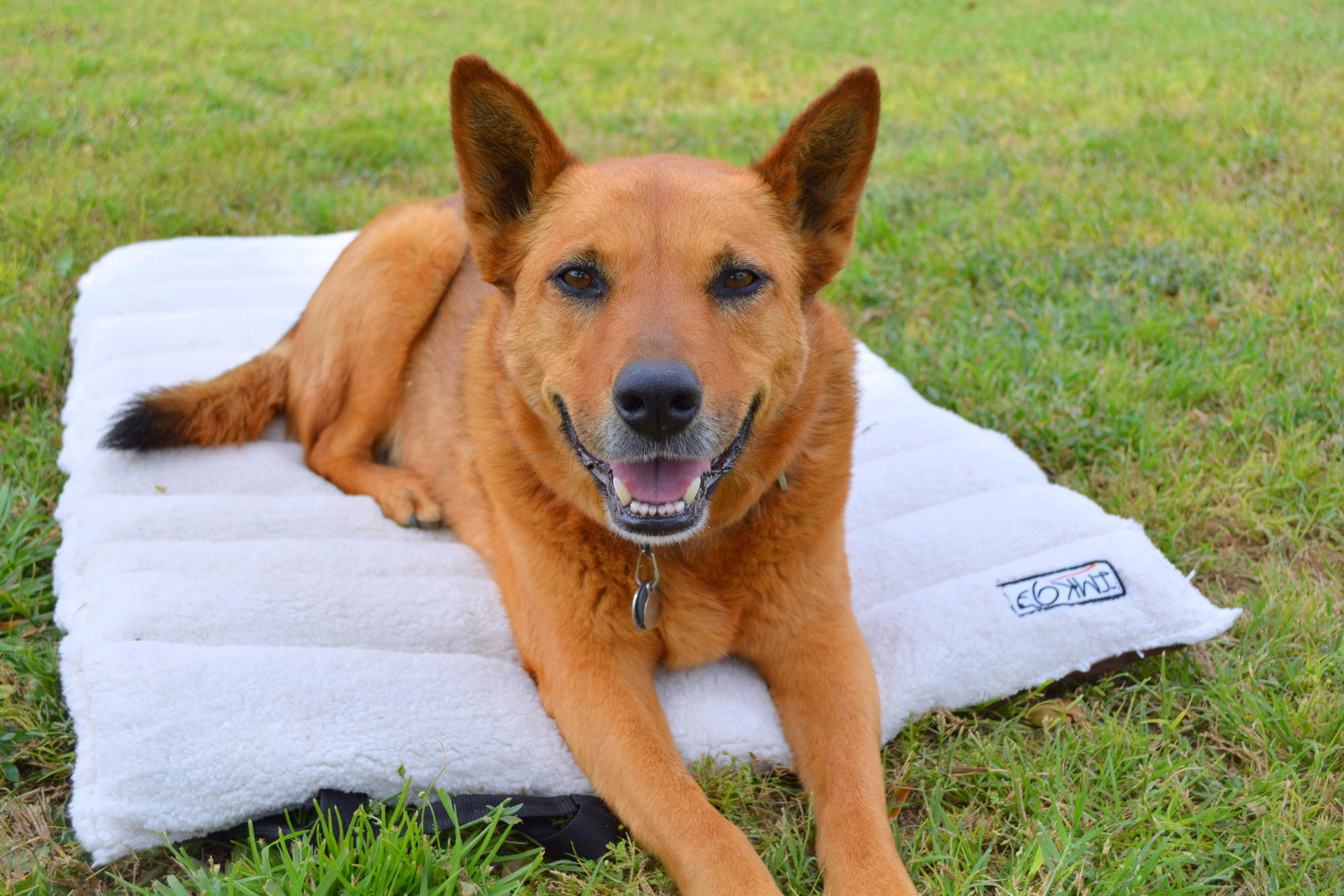 Imk9 Travel Dog Bed Review Amp Giveaway Dusty Desert Dogs